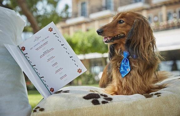 Spaniel peruses menu at Belmond Hotel Cipriani