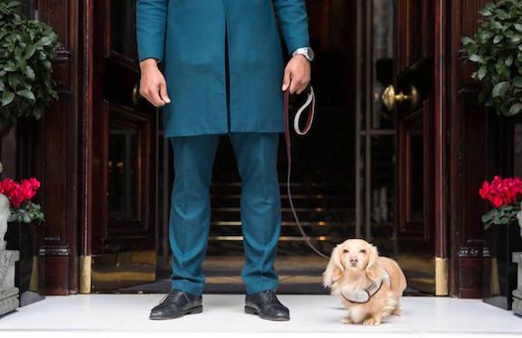 Doorman and dog, Mandarin Oriental Hyde Park London