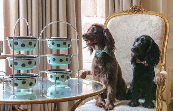 Doggy Afternoon Tea, The Egerton House Hotel, London