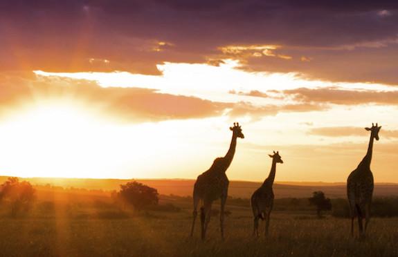 Masai Mara, Original Travel