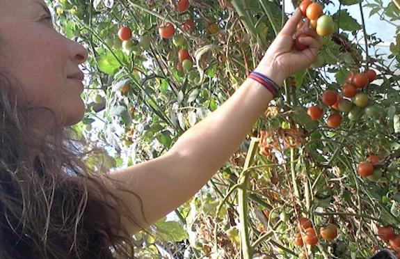 WWOOF organic farm