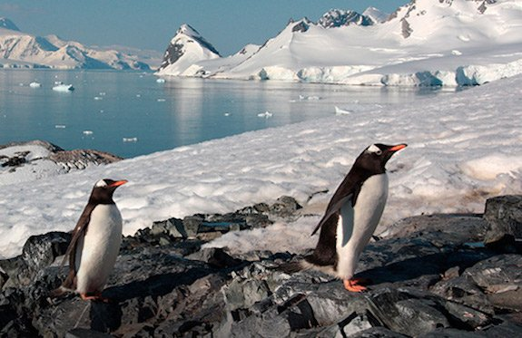 Antarctica penguins/Just You